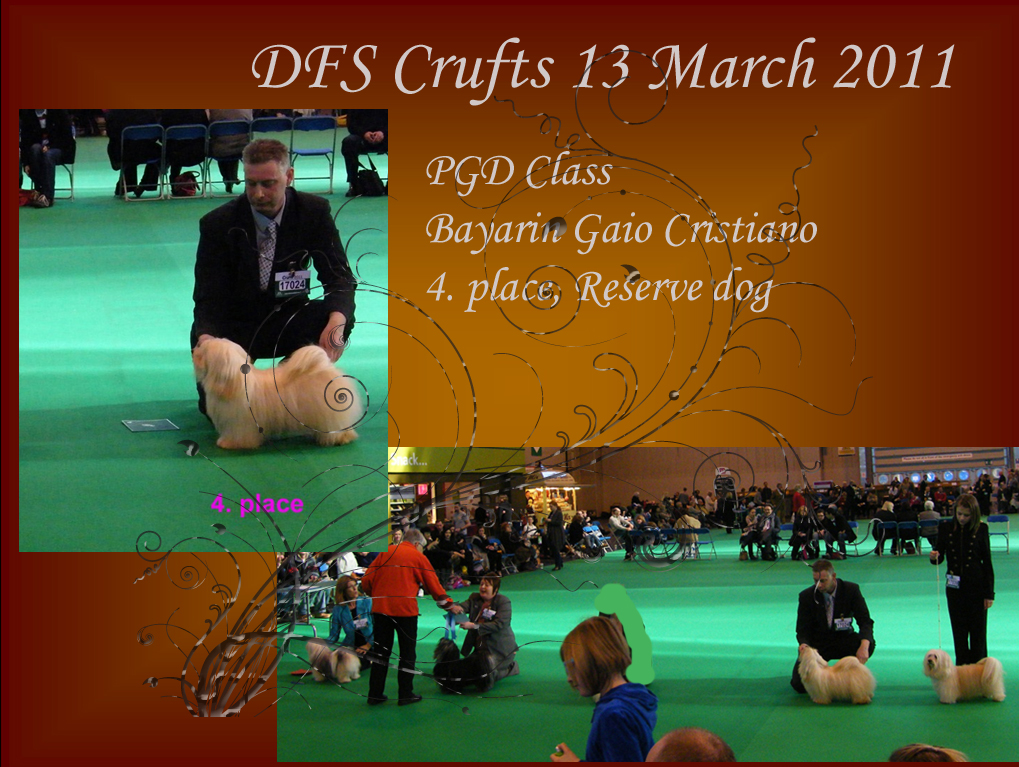 Crufts 2011, Havanese male PGD class 4. place
