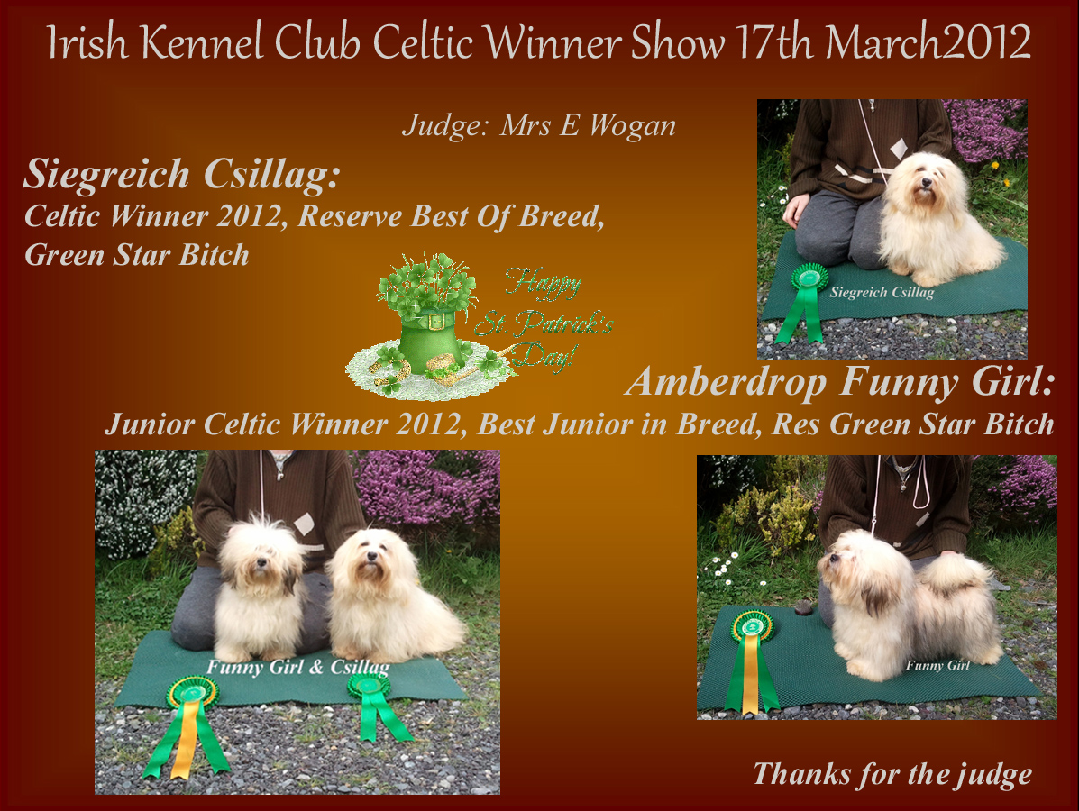 Celtic Winner 2012 Siegreich Csillag and Junior Celtic Winner 2012 Amberdrop Funny Girl
