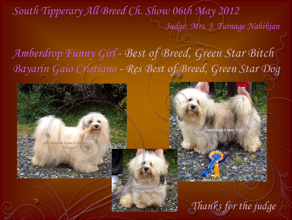 Amberdrop Funny Girl - Best of Breed, Green Star