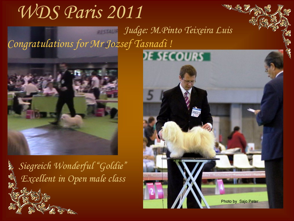 "Siegreich Wonderful ""Goldie"" Excellent at WDS Paris 2011"