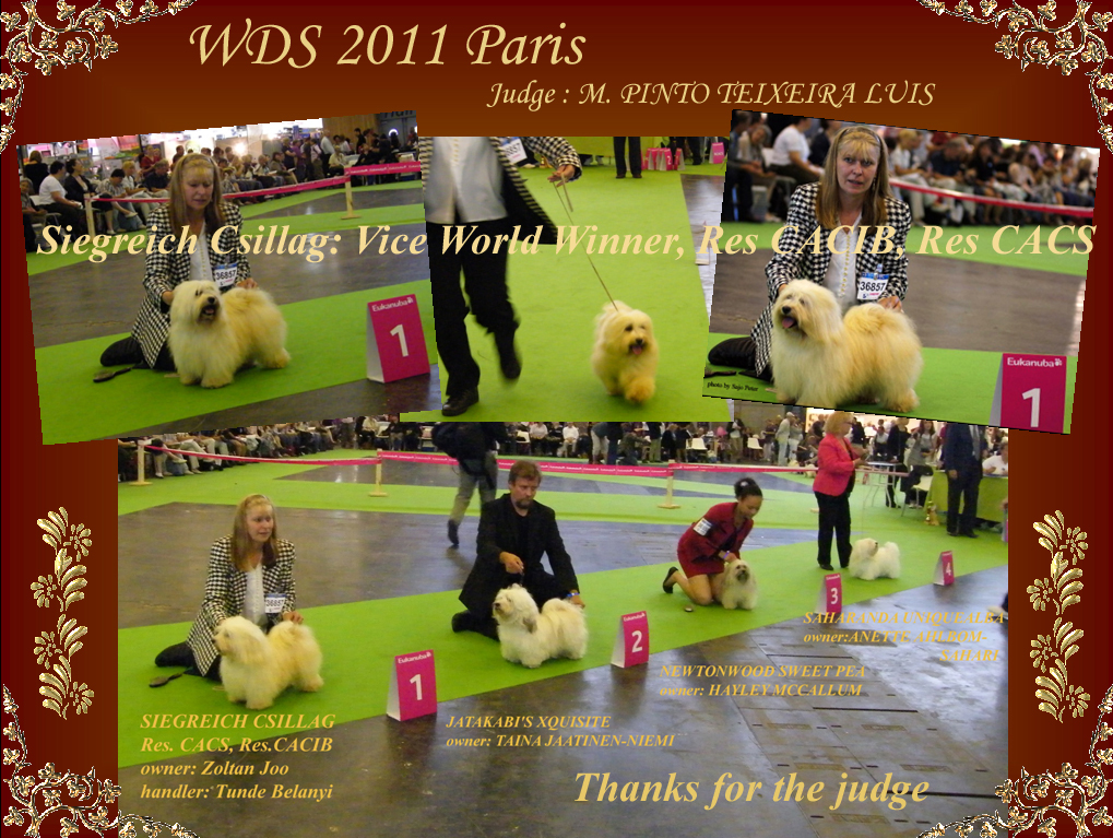 WDS 2011 Paris - Siegreich Csillag - Havanese - Vice World Winner, Res CACIB